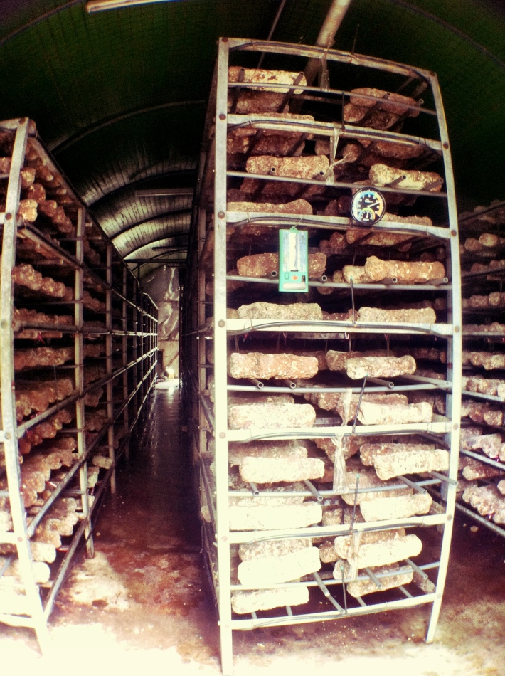 Myco Mushroom Farm 2