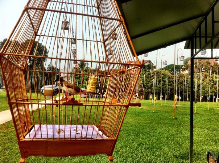 Red wiskered bulbul at Kebun Baru Bird-singing club