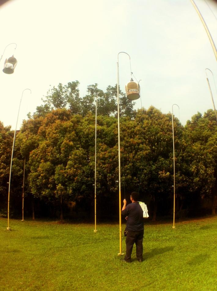 Hoisting the bird cage is easy as raising a flag