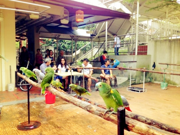 At Block 154 Serangoon North Avenue 1, parrots are the choice birds on display