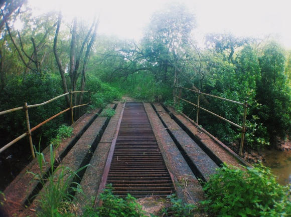 A rusted bridge found after a little walk through the vegetation