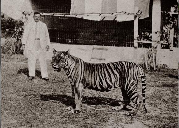 Basapa and his favourite pet, the Bengal tiger 'Apay'. Image taken from singaporebasapa.com