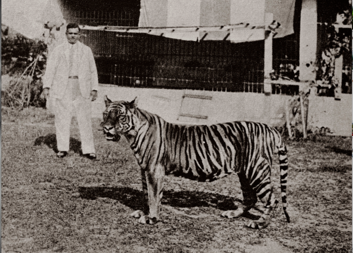 Basapa and his favourite pet, the Bengal tiger 'Apay'. Image taken from singaporebasapa.com