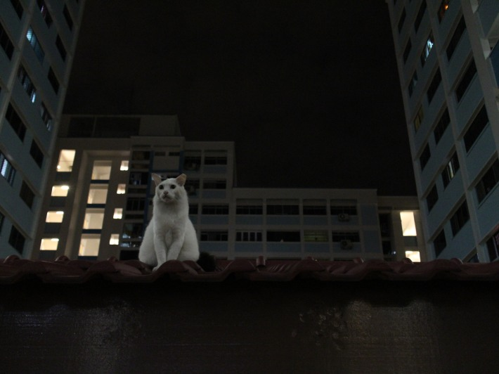 Singapore Cat on the Roof