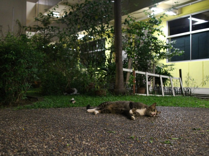 Our Singapore Community Cats 2
