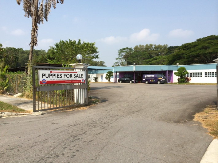 Pet farms in the farmway put up puppies for sale