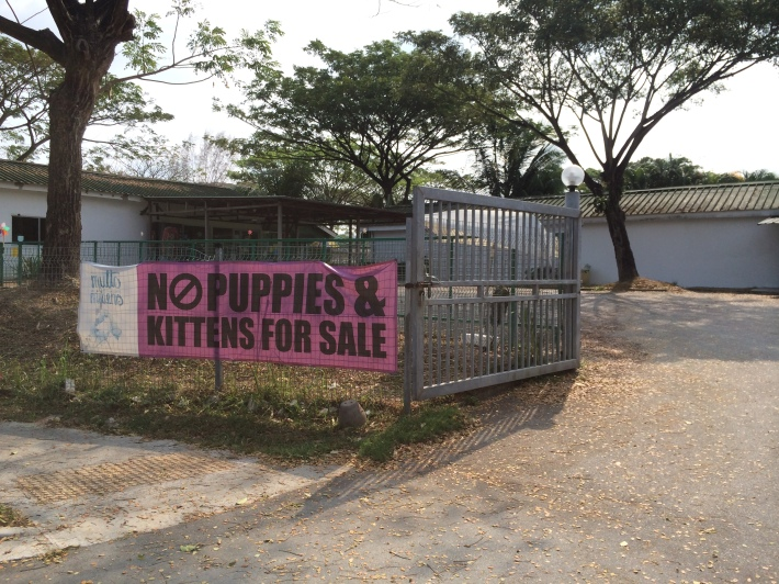 While organisations that take care of abandoned animals strictly note that there are no puppies for sale