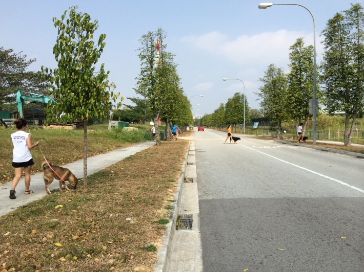 Volunteers walking dogs at Pasir Ris Farmway
