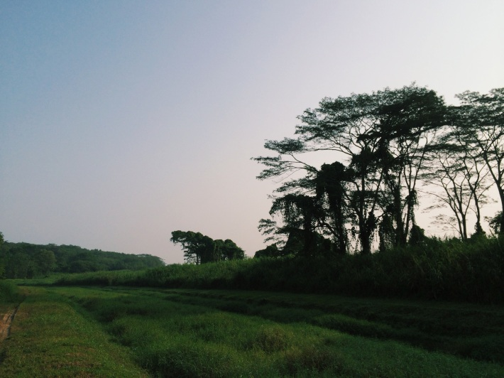 Morning shadows in Lorong Halus