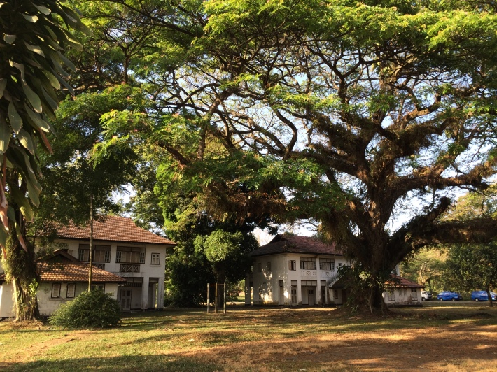 A giant tree of life stands smack in the middle of all the abandoned bungalows