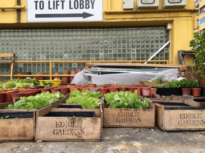 Urban agriculture on what people deem a concrete wasteland