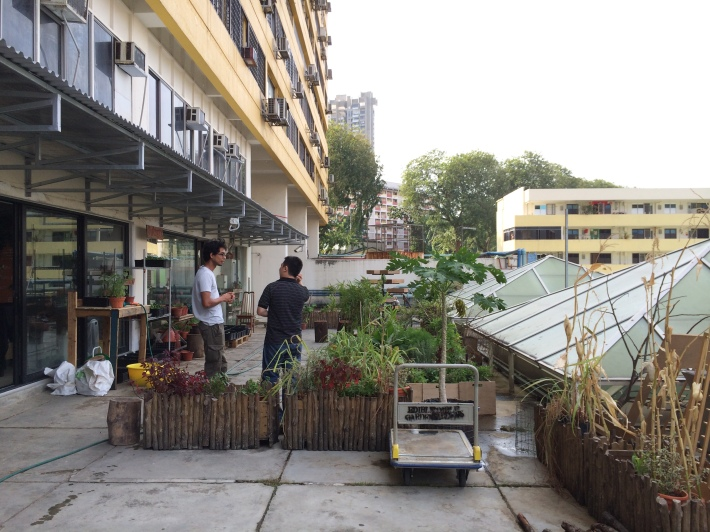 Urban farming enthusiasts