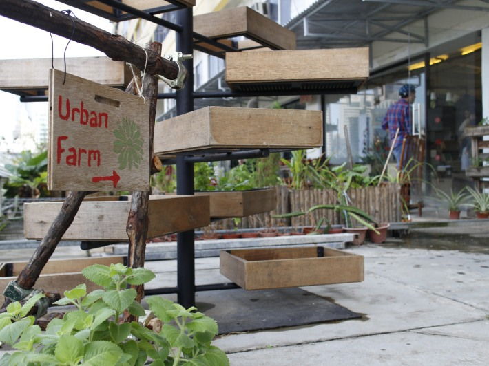 Urban farming is something many people adopt in their own flats, just that Edible Gardens takes it a step futher