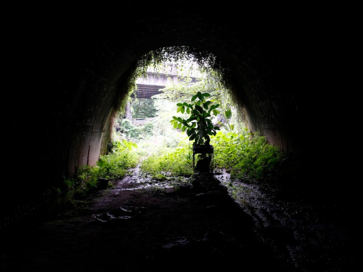The almost pitch black tunnel is one of the highlights of the walk. Watch your step as the mud can be rather slippery!
