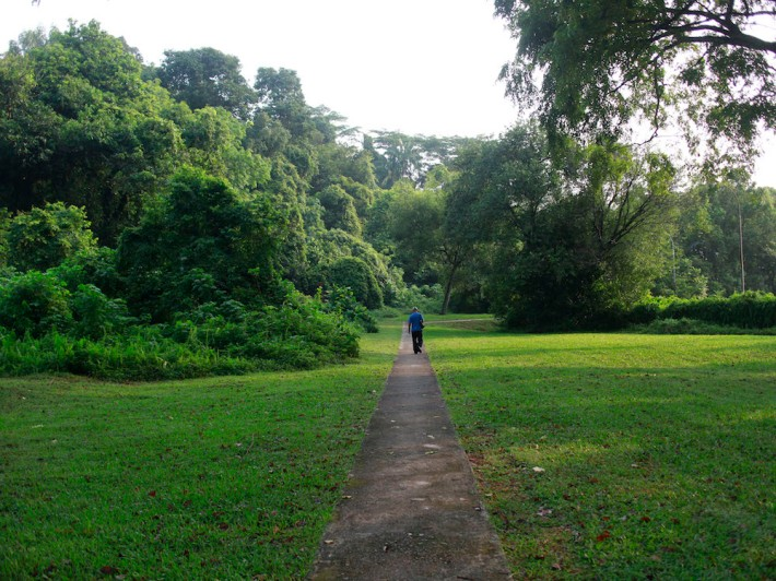A small pedestrian path takes you into Ridout Road, flanked by untouched spaces of nature