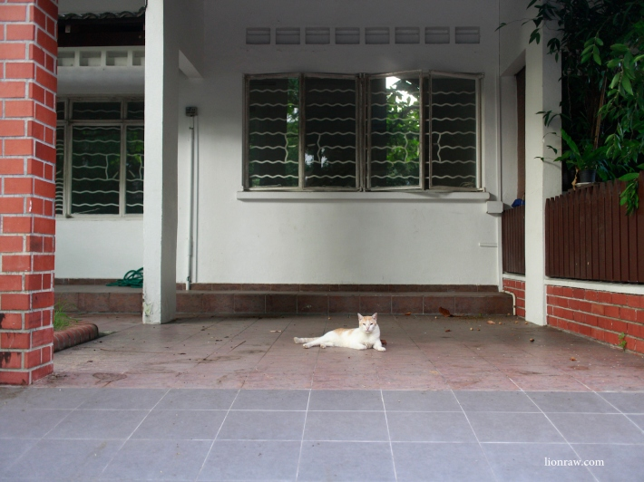 A cat makes its home in one of the many vacant houses in the estate.