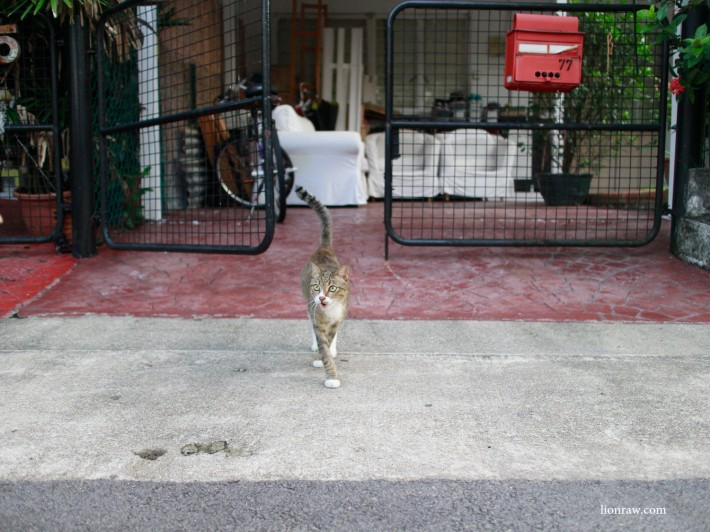 Many of the resident in Chip Bee Gardens welcomingly let their gates open, though whether its for the convenience of the cats or neighbours, i'm not too sure about.