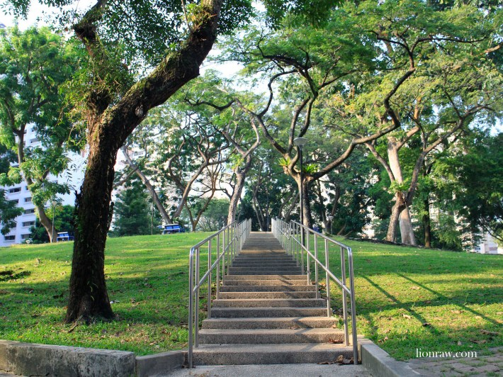 Along the walk, be sure to take some time to admire the greenery that punctuates well with the towering HDB flats of Holland Avenue.