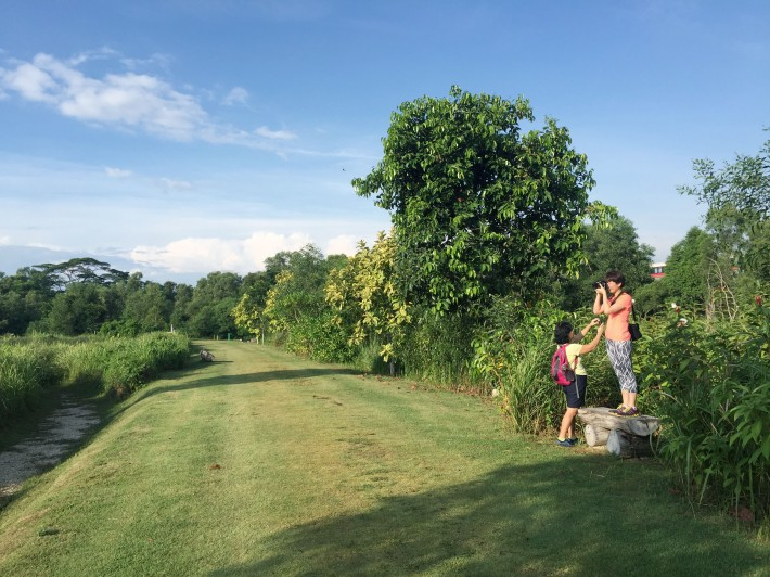 With about 70 species of birds and a rich diversity of trees in the area, photo ops are a must at Tampines Eco Green