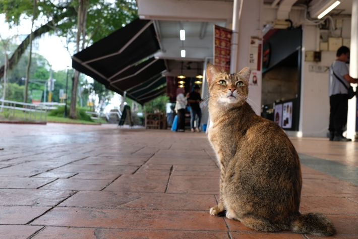 Cat at Changi Village